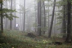 Molla di ciclismo di montagna fotografie stock libere da diritti