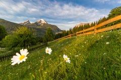 Molla di mattina in alpi tedesche Immagini Stock Libere da Diritti