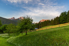 Molla di mattina in alpi tedesche Fotografia Stock