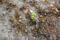 Molla di plastica dell'albero della mangrovia di inquinamento Immagine Stock Libera da Diritti