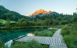 Molla di Sava, Zelenci, Slovenia Fotografie Stock