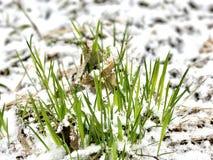 Molla fredda in Lettonia Aprile 2017 Fotografie Stock Libere da Diritti