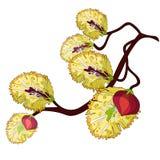 Molla gialla del fiore del ramo del salice Illustrazione di vettore illustrazione vettoriale