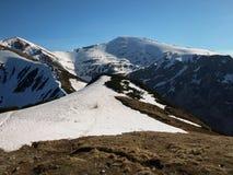 molla nelle montagne di Tatra Immagini Stock