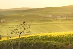 Molla rurale del paesaggio Fra Puglia e la Basilicata: sparrowt solo all'alba L'Italia Immagine Stock Libera da Diritti