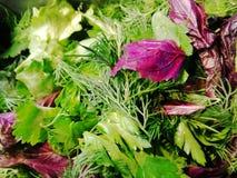 Molla verde dell'erba verde fresca immagini stock libere da diritti