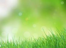 Molla verde della natura con il fondo del bokeh di luce solare Fotografia Stock