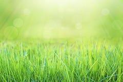 Molla verde della natura con il fondo del bokeh di luce solare e la plancia di legno Fotografia Stock