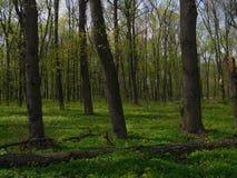 Molla verde nella foresta fotografie stock libere da diritti