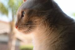 Mollie The Cat Royaltyfri Fotografi