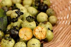 Mollis Griff Diospyros Φρούτα Στοκ φωτογραφία με δικαίωμα ελεύθερης χρήσης