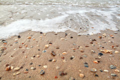 Mollusc shell on sand beach and sea. Waves Stock Image