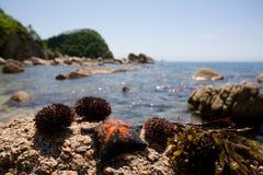 Mollusces & mare Fotografia Stock Libera da Diritti