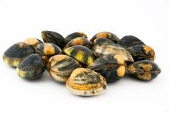 Molluschi immagini stock libere da diritti