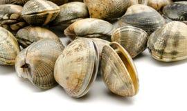 Molluschi immagini stock