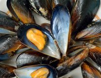 molluschi Fotografia Stock Libera da Diritti