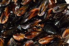 molluschi Fotografie Stock Libere da Diritti