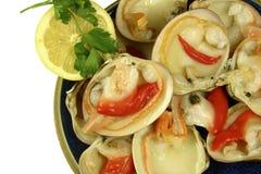 Molluschi fotografie stock