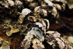 Molluschi delle coperture del fondo Coperture di struttura dei crostacei Crostacei del mare sulla spiaggia Fotografie Stock Libere da Diritti