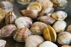 Molluschi di frittura in padella Fotografia Stock Libera da Diritti