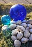 Molluschi freschi Fotografie Stock