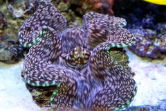 Mollusco Fotografia Stock