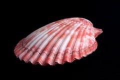 Mollusco Fotografia Stock Libera da Diritti
