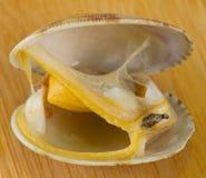 Mollusco bollito Immagini Stock