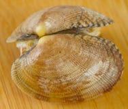 Mollusco bollito Fotografia Stock