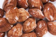 Mollusco dei molluschi Fotografia Stock Libera da Diritti