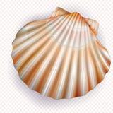 Mollusco delle coperture di pettine su un fondo trasparente royalty illustrazione gratis