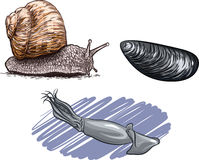 Molluscs. Vector illustration of the animals of the species of mollusks Stock Image