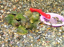 Molluscs. Composition caught molluscs and toys Royalty Free Stock Photo