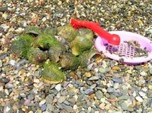 Molluscs Royalty Free Stock Photo