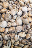 Molluscs Royalty Free Stock Photography