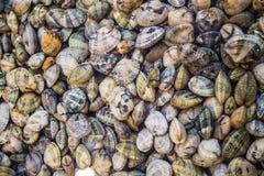 Molluscs Stock Photo