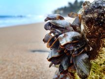 Molluscs on the plastic bottle. A lot of molluscs on the plastic bottle Royalty Free Stock Photo