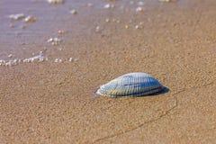 Molluscum på stranden Arkivbild