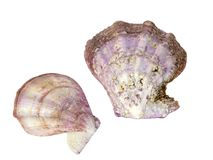 Mollusk bowl separately Royalty Free Stock Photos