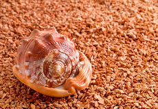 Mollusk brown shell Stock Photo