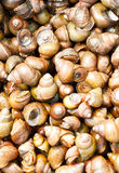 Mollusk Stock Images