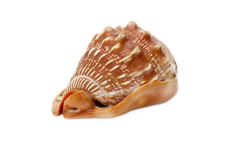 Mollusk sink Royalty Free Stock Photography