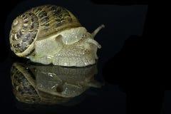 Molluske Lizenzfreie Stockfotografie