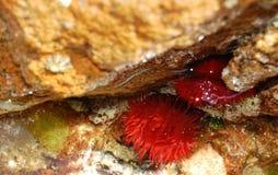 Molluske Stockfotografie