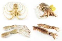 Free Mollusks Stock Image - 22014581