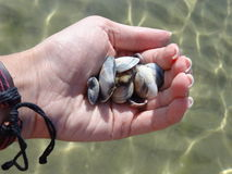 Handful of cockleshells against the sea Stock Photo