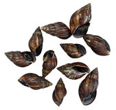 Mollusks isolated Stock Photos