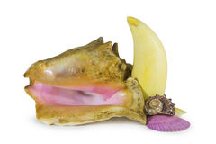 Mollusks and tooth Stock Photography
