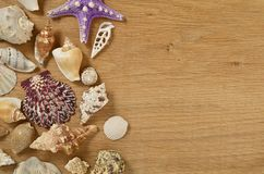 Mollusks on wooden table close up. Seashells on an old wooden table with copy space for text stock photography