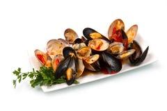 Mollusque photo libre de droits